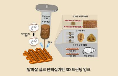 차형준-조동우 교수 공동연구팀, 말미잘 실크 단백질로 인공 귀, 코, 혈관 만든다