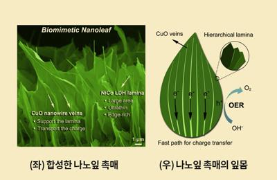 화공 용기중 교수팀, '나노잎'이 수소에너지 만든다